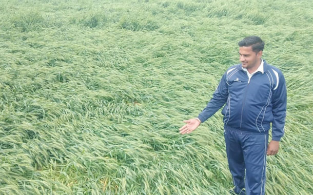 बारिश से फसलों को हुआ भारी नुक्सान
